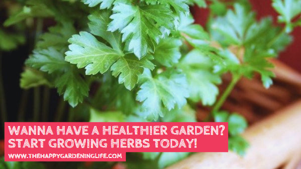 Wanna Have a Healthier Garden? Start Growing Herbs Today!