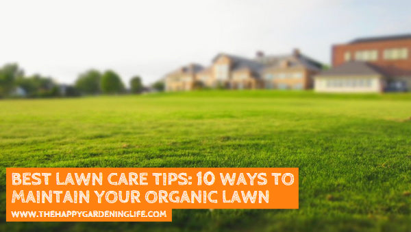 Best Lawn Care Tips: 10 Ways to Maintain Your Organic Lawn