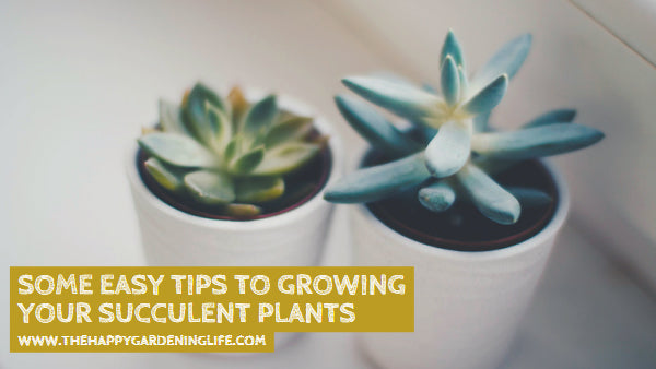 Some Easy Tips to Growing Your Succulent Plants