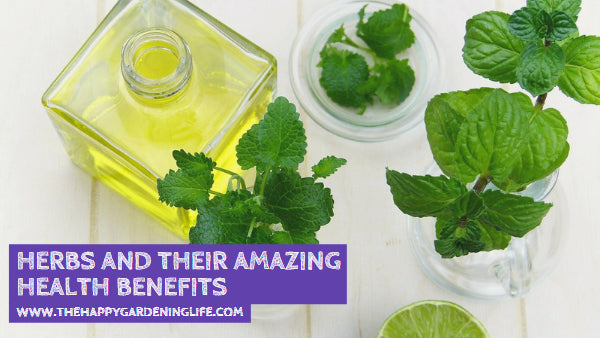 Herbs and Their Amazing Health Benefits
