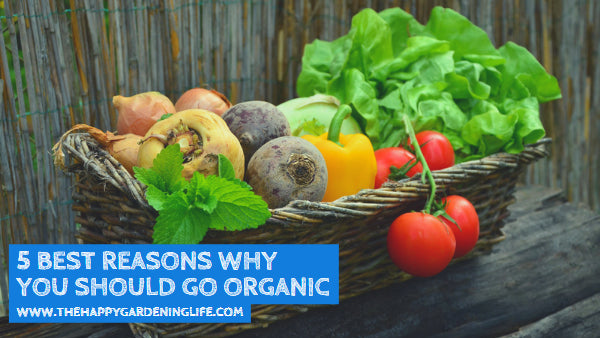 5 Best Reasons Why You Should Go Organic