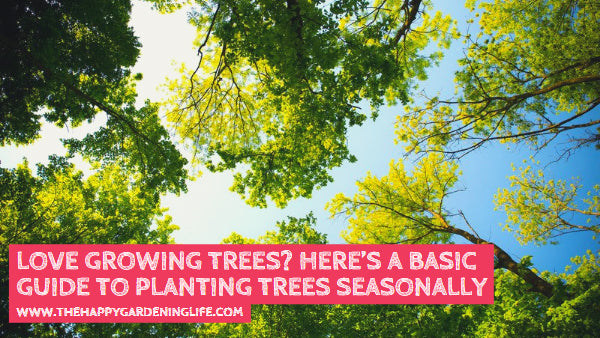 Love Growing Trees? Here's a Basic Guide to Planting Trees Seasonally