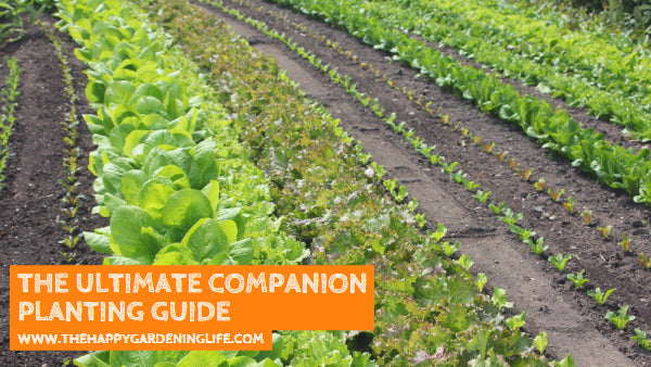 The Ultimate Companion Planting Guide