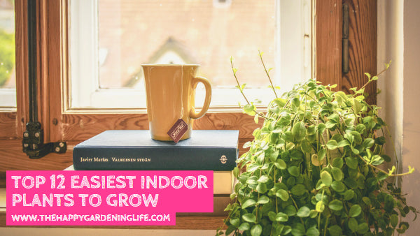 Top 12 Easiest Indoor Plants to Grow