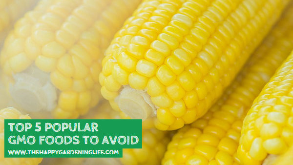 Top 5 Popular GMO Foods to Avoid