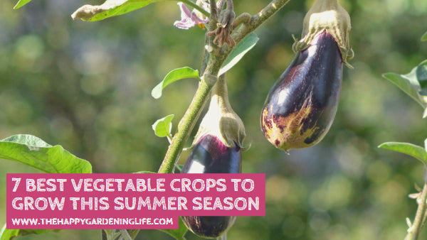 7 Best Vegetable Crops to Grow this Summer Season