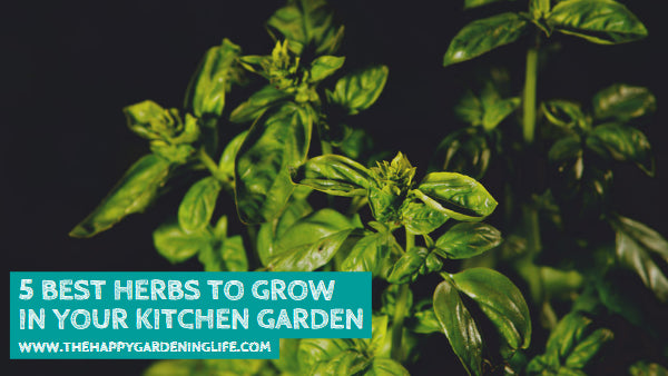 5 Best Herbs to Grow in Your Kitchen Garden