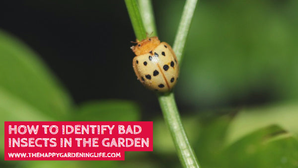 How to Identify Bad Insects in the Garden
