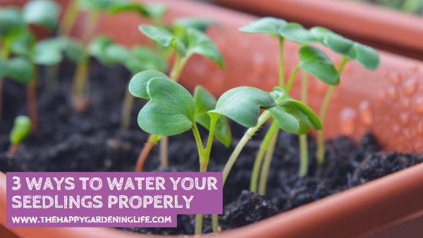 3 Ways to Water Your Seedlings Properly
