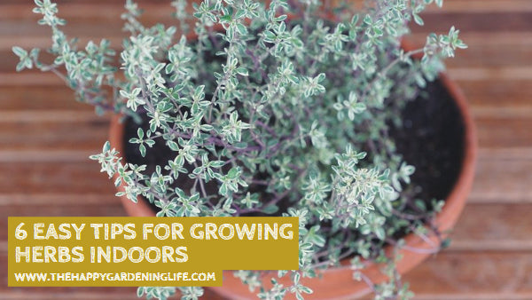 6 Easy Tips for Growing Herbs Indoors