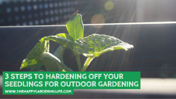 3 Steps to Hardening Off Your Seedlings for Outdoor Gardening