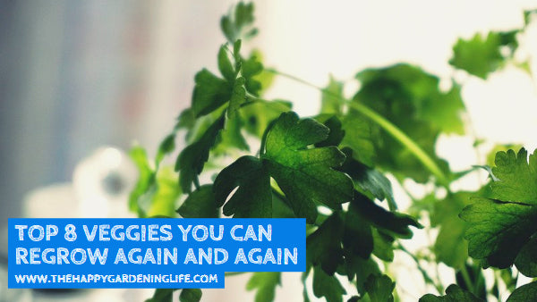 Top 8 Veggies You Can Regrow Again and Again