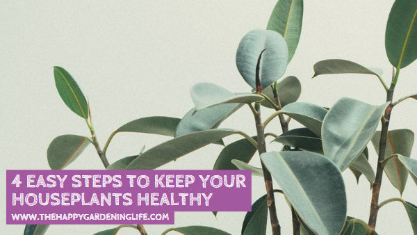 4 Easy Steps to Keep Your Houseplants Healthy