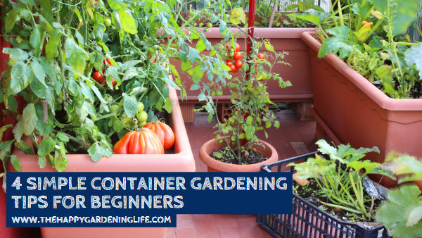 4 Simple Container Gardening Tips for Beginners