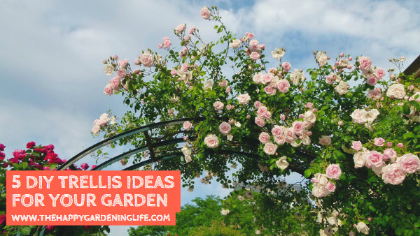 5 DIY Trellis Ideas for Your Garden