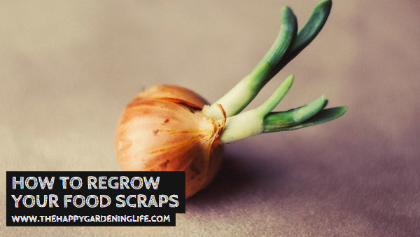 How to Regrow Your Food Scraps