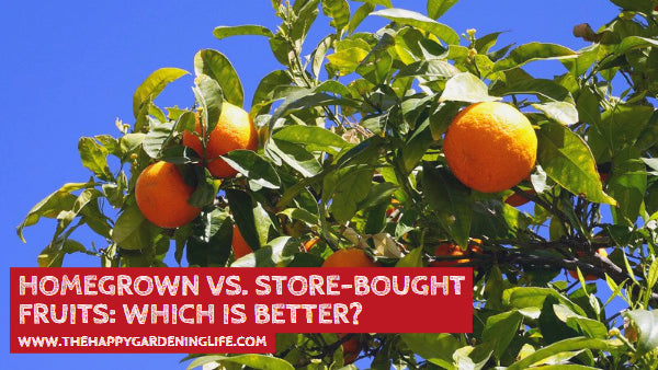 Homegrown vs. Store-Bought Fruits: Which is Better?