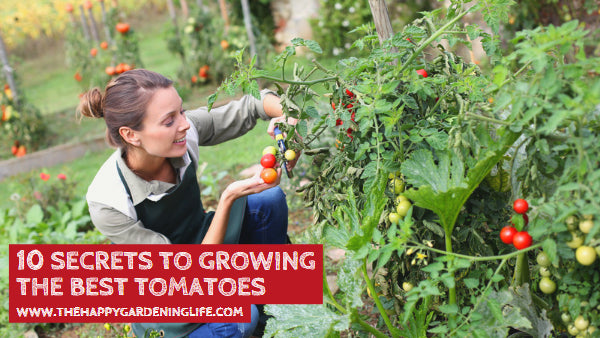 10 Secrets to Growing the Best Tomatoes