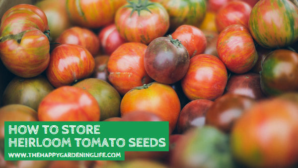 How to Store Heirloom Tomato Seeds