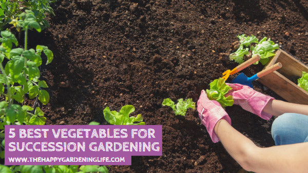 5 Best Vegetables for Succession Gardening