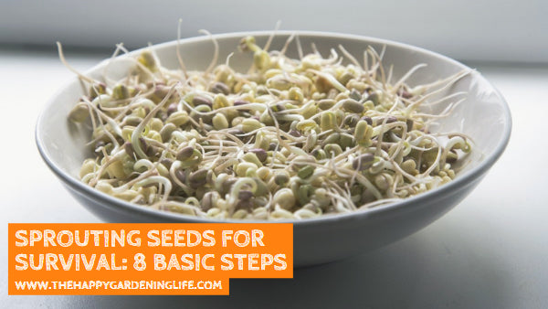 Sprouting Seeds for Survival: 8 Basic Steps