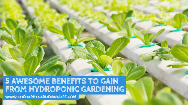 5 Awesome Benefits to Gain from Hydroponic Gardening