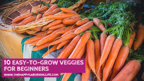 10 Easy-to-Grow Veggies for Beginners
