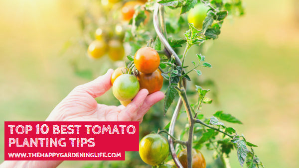 Top 10 Best Tomato Planting Tips