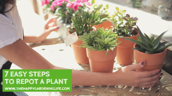 7 Easy Steps to Repot a Plant