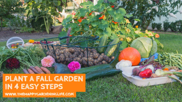 Plant a Fall Garden in 4 Easy Steps