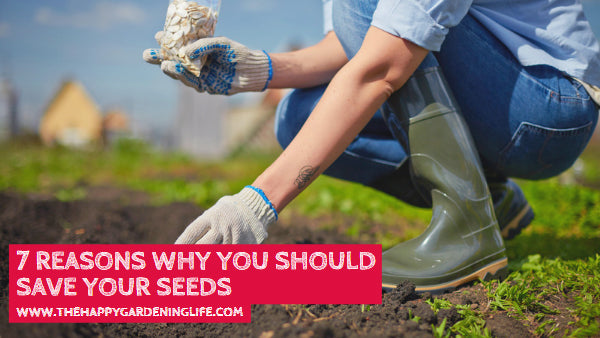 7 Reasons Why You Should Save Your Seeds