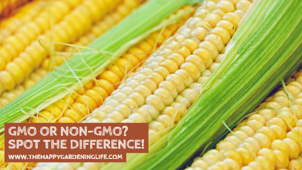 GMO or Non-GMO? Spot the Difference!