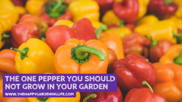 The ONE Pepper You Should Not Grow in Your Garden