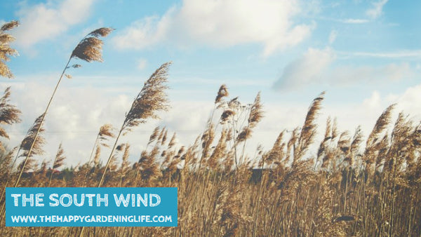 The South Wind