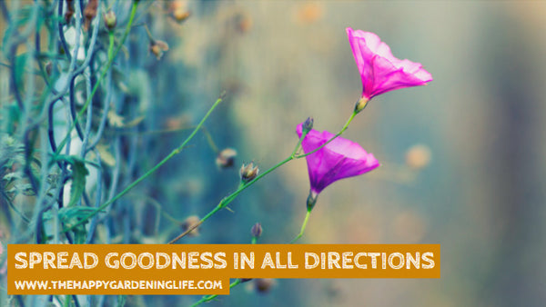 Spread Goodness In All Directions