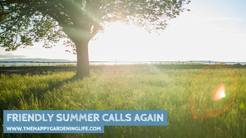 Friendly Summer Calls Again