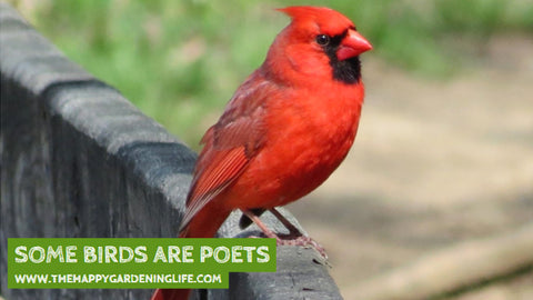 Some Birds Are Poets