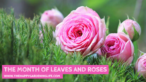 The Month Of Leaves And Roses