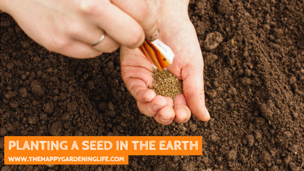 Planting A Seed In The Earth