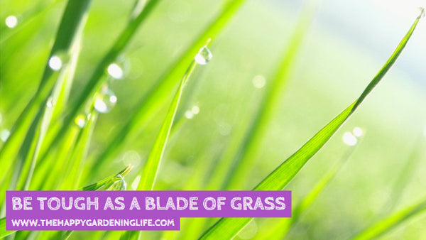 Be Tough As A Blade Of Grass