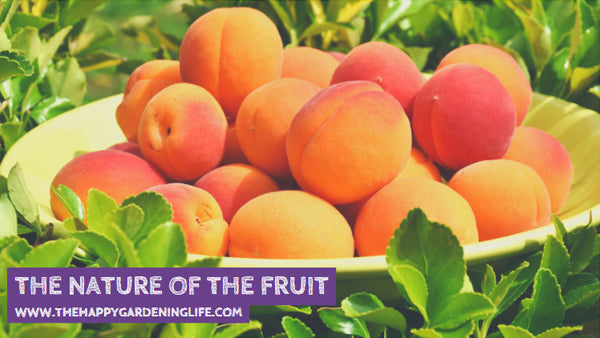 The Nature Of The Fruit