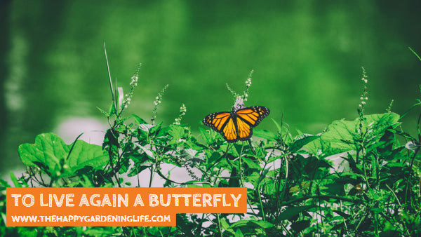 To Live Again A Butterfly
