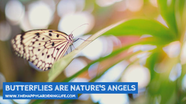 Butterflies Are Nature's Angels