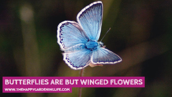 Butterflies Are But Winged Flowers