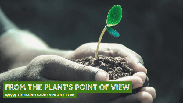 From The Plant's Point Of View