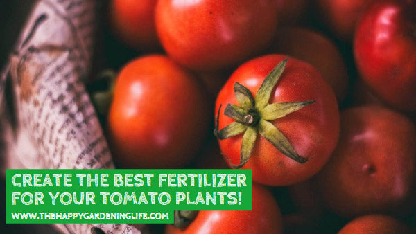 Create the Best Fertilizer for Your Tomato Plants!