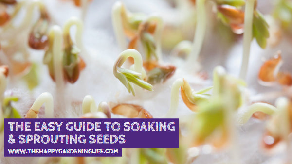 The Easy Guide to Soaking & Sprouting Seeds