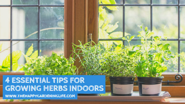 4 Essential Tips for Growing Herbs Indoors
