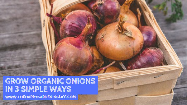 Grow Organic Onions in 3 Simple Ways