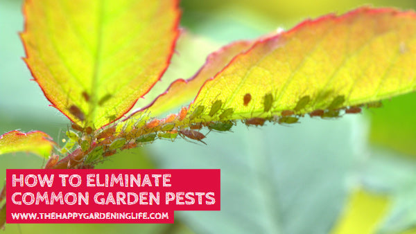 How to Eliminate Common Garden Pests